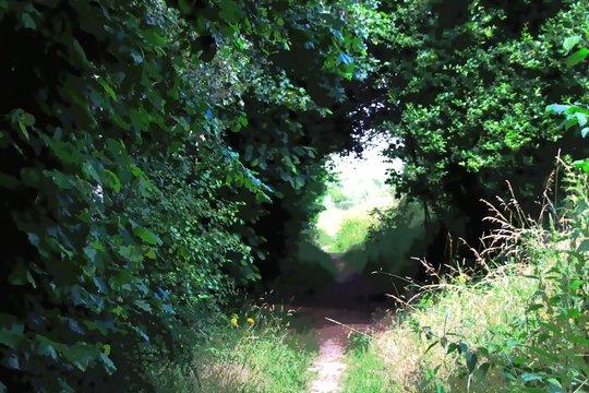 Wald, Licht am Ende des Tunnels
